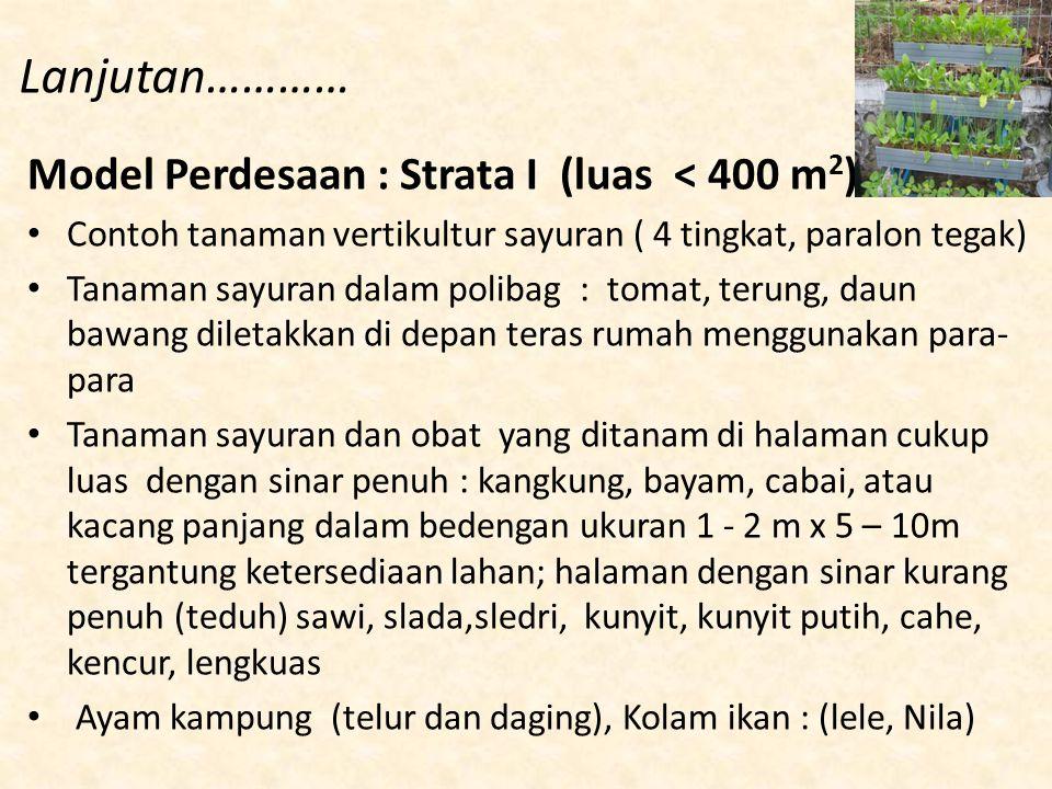 Lanjutan………… Model Perdesaan : Strata I (luas < 400 m 2 ) Contoh tanaman vertikultur sayuran ( 4 tingkat, paralon tegak) Tanaman sayuran dalam polibag