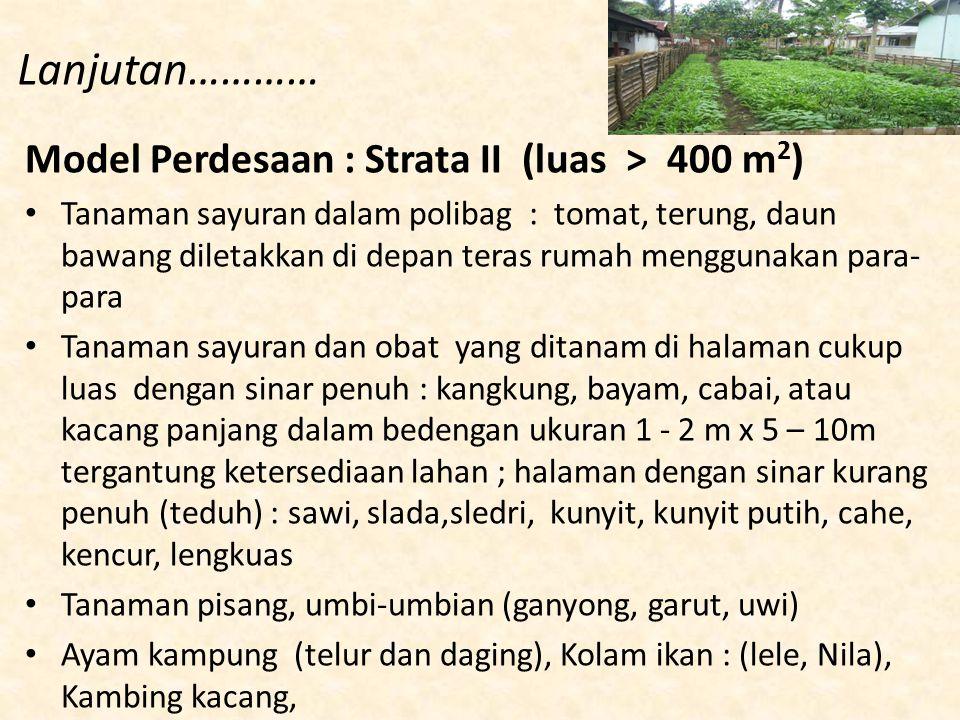 Lanjutan………… Model Perdesaan : Strata II (luas > 400 m 2 ) Tanaman sayuran dalam polibag : tomat, terung, daun bawang diletakkan di depan teras rumah