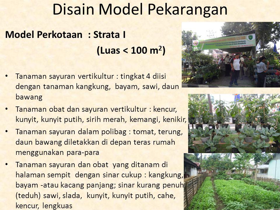Disain Model Pekarangan Model Perkotaan : Strata I (Luas < 100 m 2 ) Tanaman sayuran vertikultur : tingkat 4 diisi dengan tanaman kangkung, bayam, saw