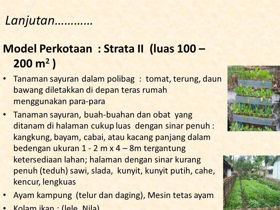 Lanjutan………… Model Perkotaan : Strata II (luas 100 – 200 m 2 ) Tanaman sayuran dalam polibag : tomat, terung, daun bawang diletakkan di depan teras ru