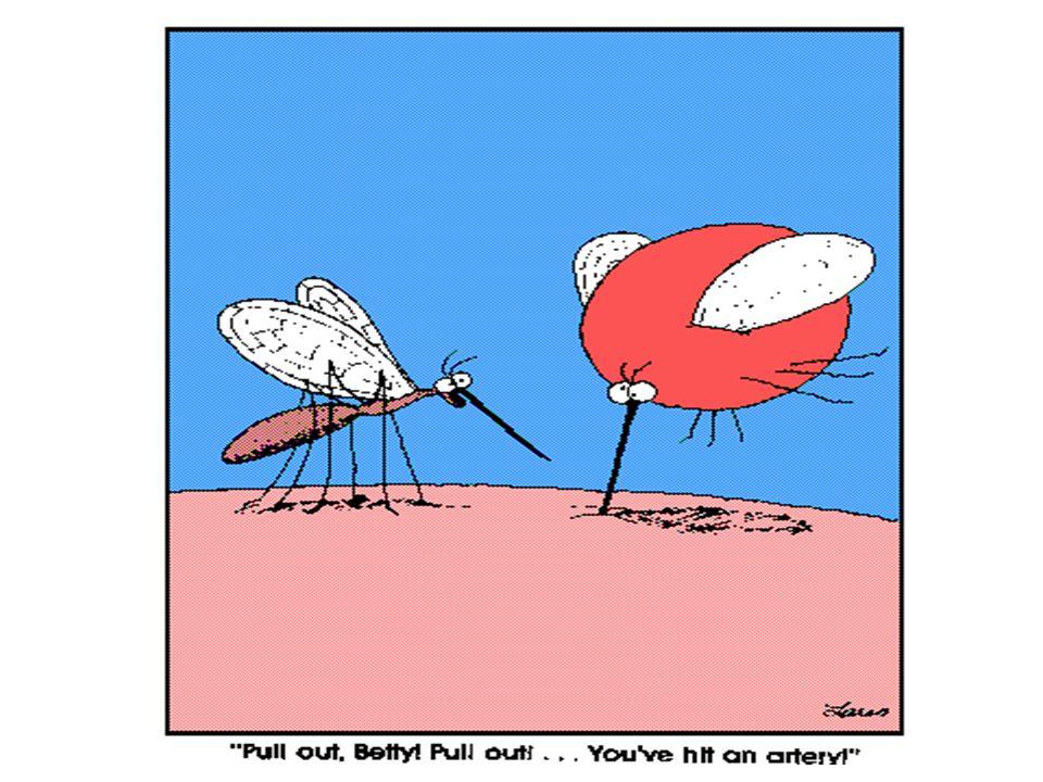 DAUR HIDUP NYAMUK Aedes aegypti TELUR JENTIKPUPA 1 – 2 hr 6 – 8 hr 2 – 4 hr