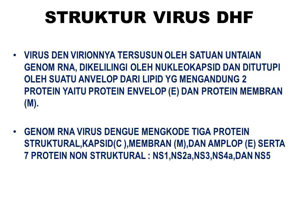 STRUKTUR VIRUS DHF VIRUS DEN VIRIONNYA TERSUSUN OLEH SATUAN UNTAIAN GENOM RNA, DIKELILINGI OLEH NUKLEOKAPSID DAN DITUTUPI OLEH SUATU ANVELOP DARI LIPI