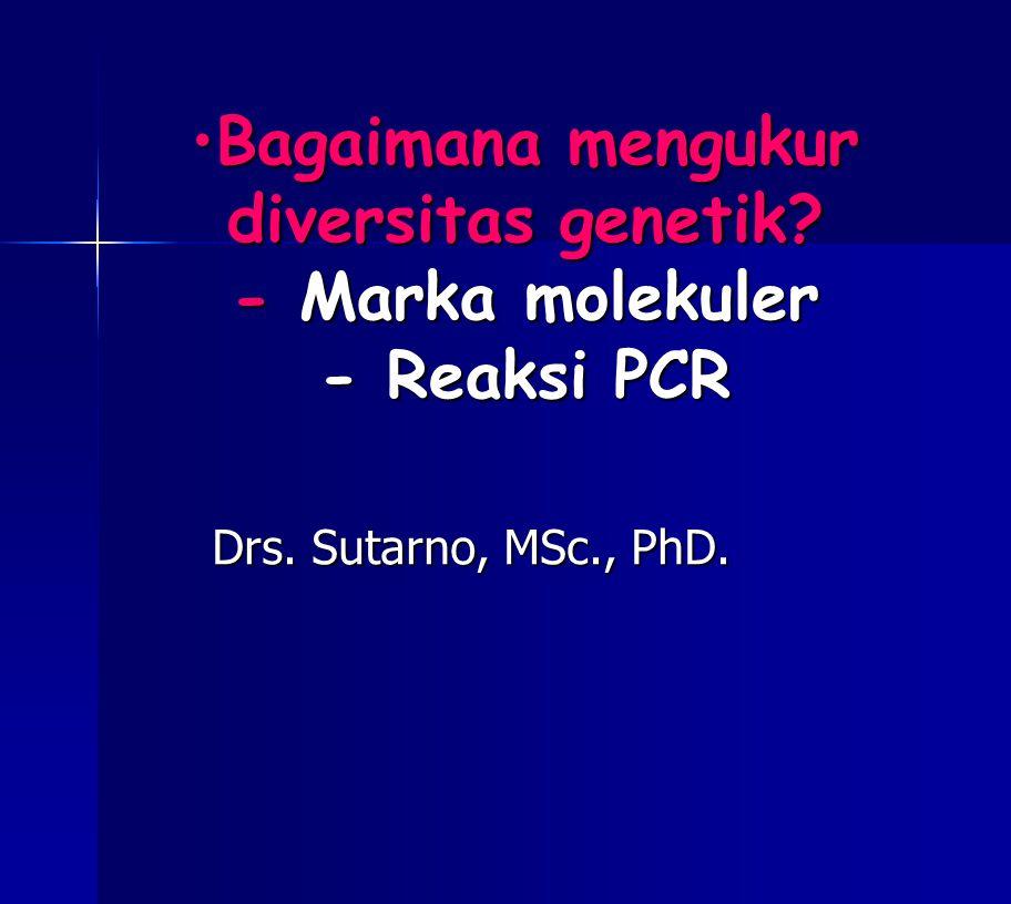 Bagaimana mengukur diversitas genetik? - Marka molekuler - Reaksi PCR Drs. Sutarno, MSc., PhD.