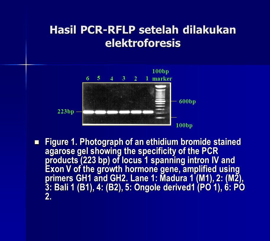 Hasil PCR-RFLP setelah dilakukan elektroforesis Figure 1. Photograph of an ethidium bromide stained agarose gel showing the specificity of the PCR pro