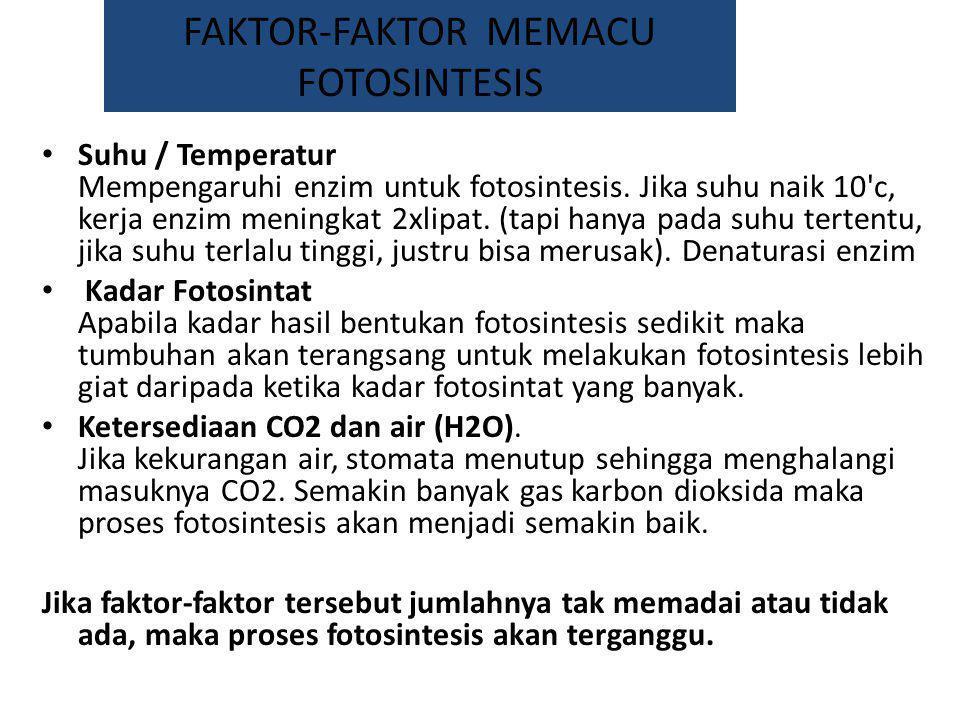 FAKTOR-FAKTOR MEMACU FOTOSINTESIS Suhu / Temperatur Mempengaruhi enzim untuk fotosintesis. Jika suhu naik 10'c, kerja enzim meningkat 2xlipat. (tapi h