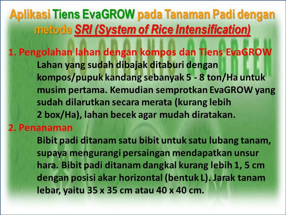 Aplikasi Tiens EvaGROW pada Tanaman Padi dengan metode SRI (System of Rice Intensification) 1. Pengolahan lahan dengan kompos dan Tiens EvaGROW Lahan