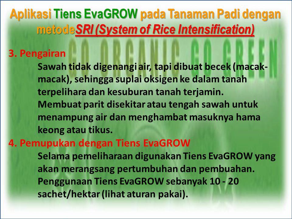 Aplikasi Tiens EvaGROW pada Tanaman Padi dengan metode SRI (System of Rice Intensification) 3. Pengairan Sawah tidak digenangi air, tapi dibuat becek