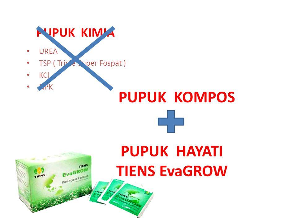 EvaGROW adalah pupuk hayati multiguna yang merupakan formula konsorsium mikroorganisme yang berperan meningkatkan hasil pertanian organik secara berkesinambungan.