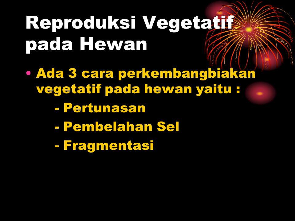 Reproduksi Vegetatif pada Hewan Ada 3 cara perkembangbiakan vegetatif pada hewan yaitu : - Pertunasan - Pembelahan Sel - Fragmentasi