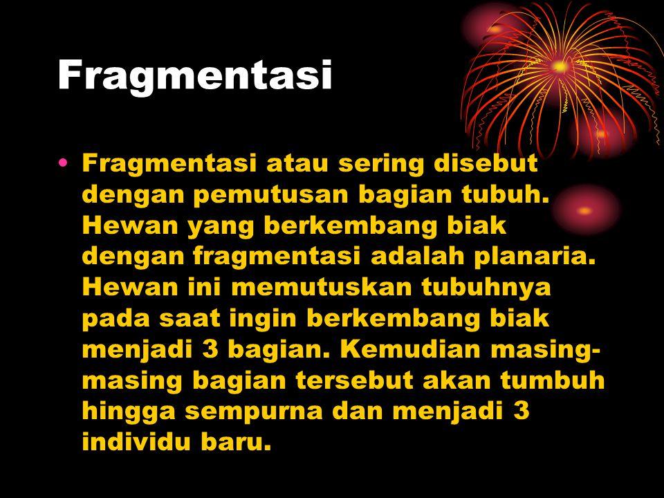Fragmentasi Fragmentasi atau sering disebut dengan pemutusan bagian tubuh. Hewan yang berkembang biak dengan fragmentasi adalah planaria. Hewan ini me