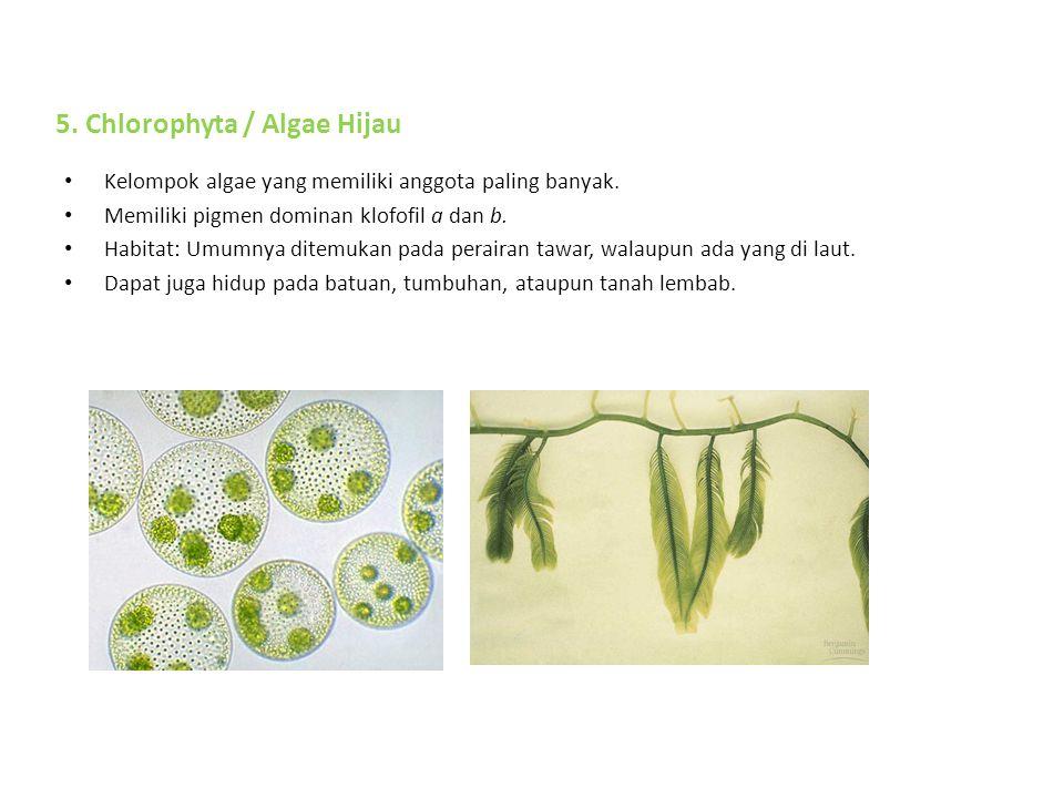 Kelompok algae yang memiliki anggota paling banyak.