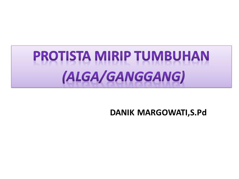 1.Menjelaskan 3 ciri-ciri umum filum dalam kelompok Protista mirip Tumbuhan (Alga/Ganggang).