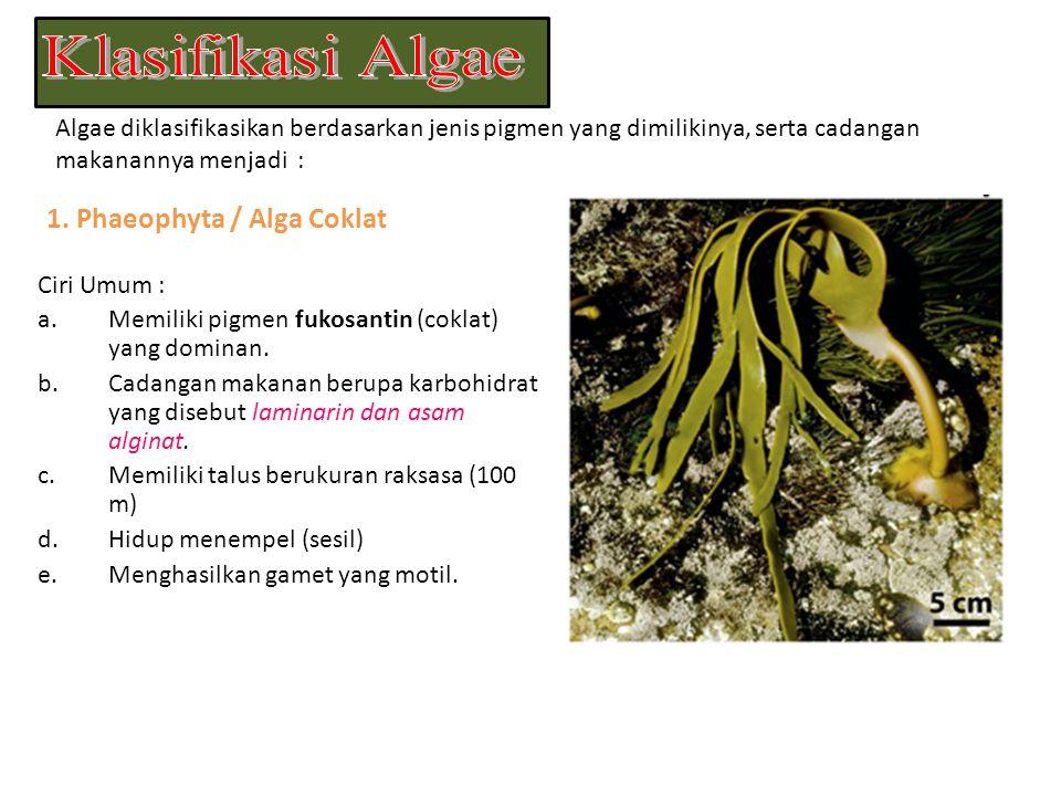 Ganggang hijau merupakan sumber fitoplanton yang digunakan sebagai pakan ikan dan hewan air lainnya.