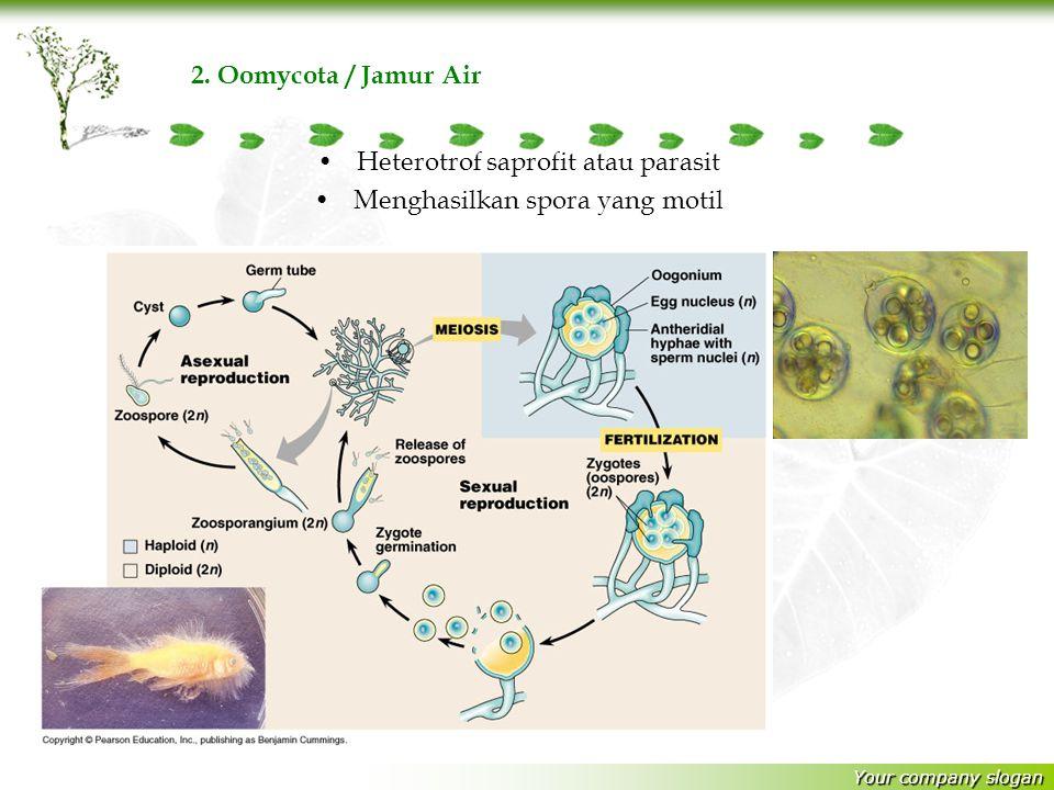 Your company slogan Heterotrof saprofit atau parasit Menghasilkan spora yang motil Ciri Umum Protista Seperti Jamur. 1. Myxomycota /Jamur Lendir Heter