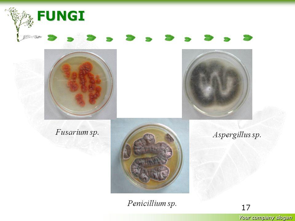 Your company slogan 16 FUNGI Saccharomyces cereviseaeCandida albicans