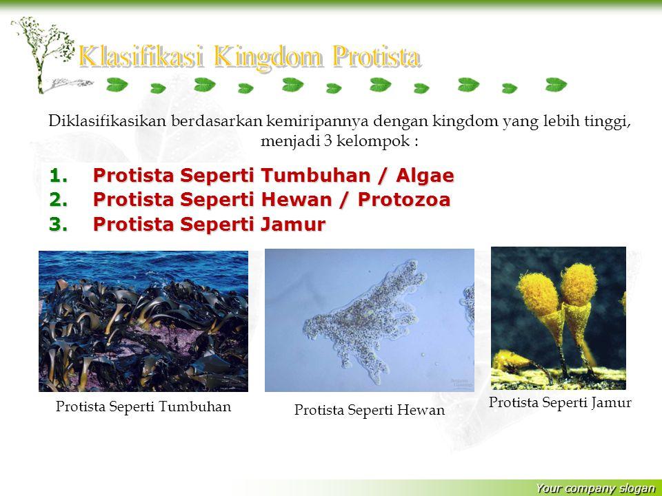 Your company slogan 1.Protista Seperti Tumbuhan / Algae 2.Protista Seperti Hewan / Protozoa 3.Protista Seperti Jamur Diklasifikasikan berdasarkan kemiripannya dengan kingdom yang lebih tinggi, menjadi 3 kelompok : Protista Seperti Tumbuhan Protista Seperti Hewan Protista Seperti Jamur