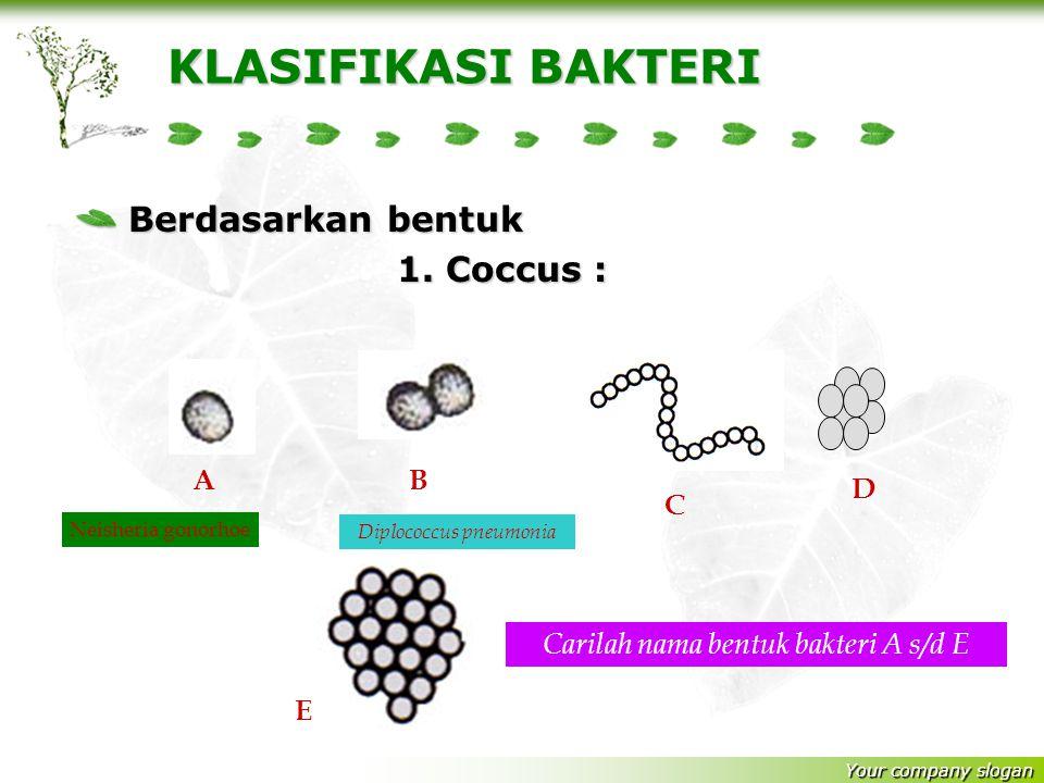 STRUKTUR TUBUH BAKTERI 1.Lapisan lendir melindungi terhadap kekeringan dan sebagai gudang makanan dan melindungi diri dari serangan sel inang 2.Dindin