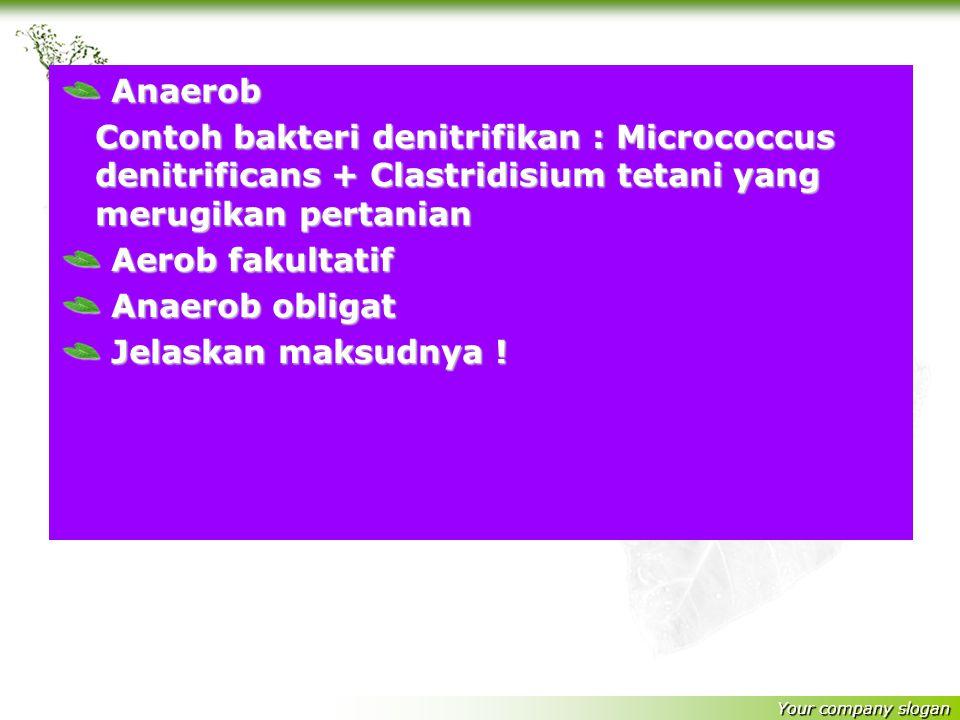 Your company slogan Aerob Contoh bakteri nitrifikasi : bakteri yang membantu menambat N 2 dari udara bebas dan menyuburkan pertanian : 1.Bakteri Nitri