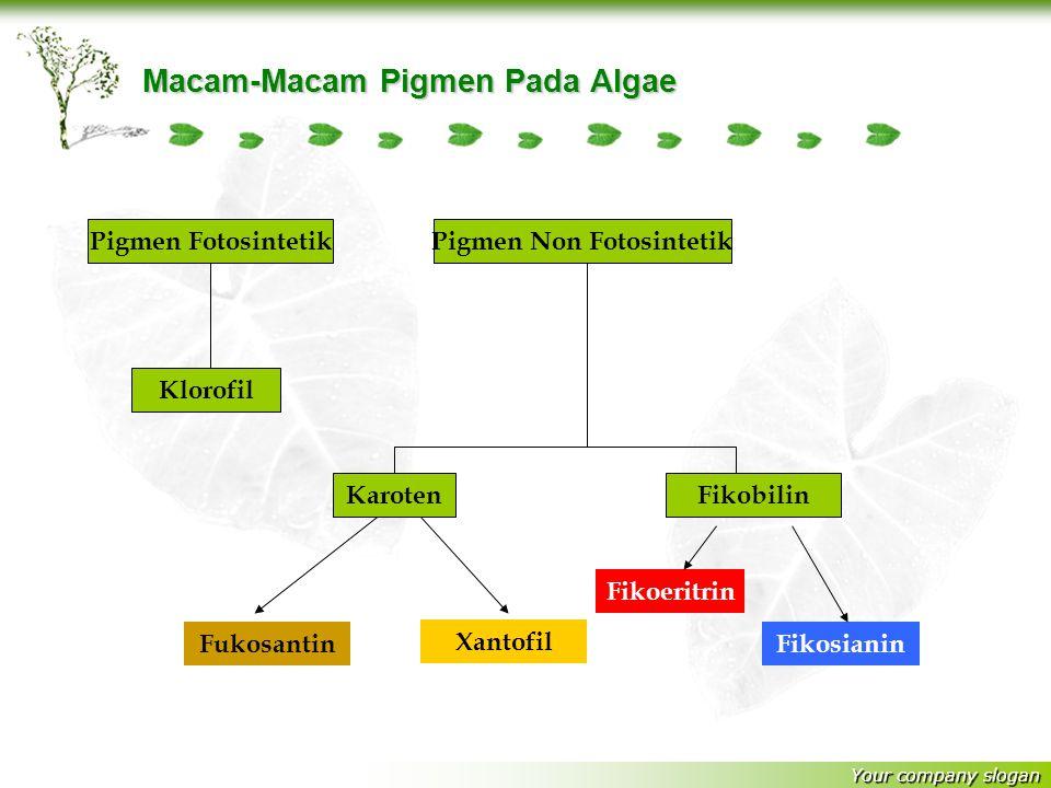 Your company slogan Macam-Macam Pigmen Pada Algae Pigmen FotosintetikPigmen Non Fotosintetik Klorofil Fukosantin Xantofil Fikoeritrin Fikosianin KarotenFikobilin