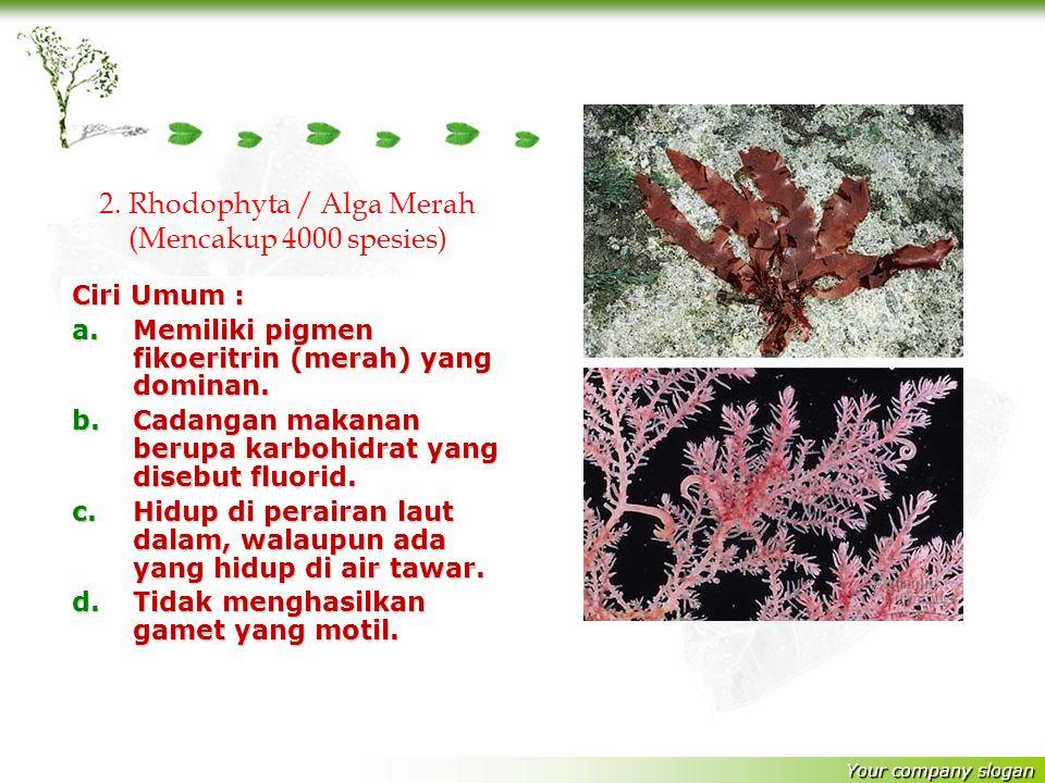 Your company slogan Ciri Umum : a.Memiliki pigmen fikoeritrin (merah) yang dominan.