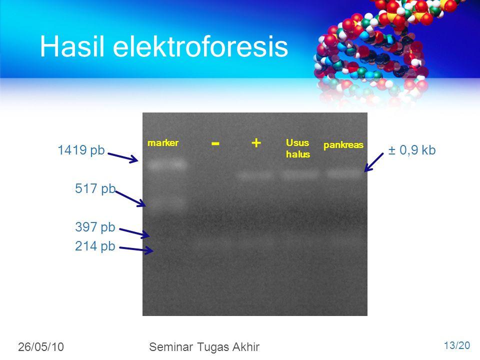 1419 pb ± 0,9 kb 517 pb 397 pb 214 pb marker + Usus halus pankreas - Hasil elektroforesis 13/20 26/05/10Seminar Tugas Akhir