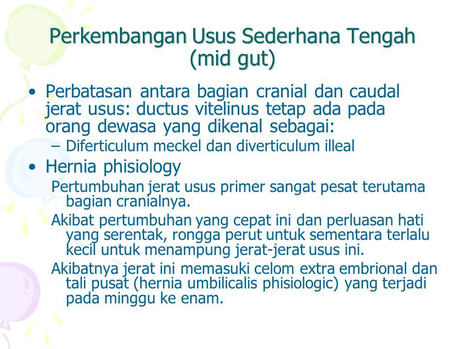 Perkembangan Usus Sederhana Tengah (mid gut) Perbatasan antara bagian cranial dan caudal jerat usus: ductus vitelinus tetap ada pada orang dewasa yang