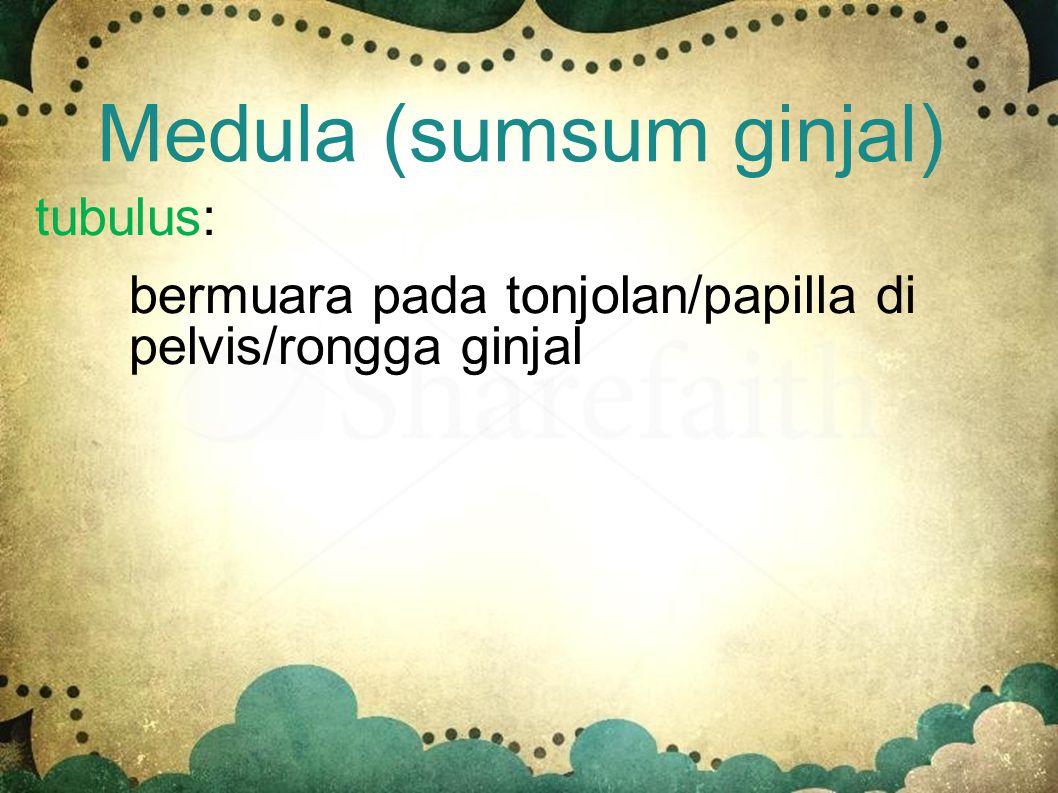 Medula (sumsum ginjal) - Terbagi atas piramida ginjal dan piala ginjal - mengandung banyak pembuluh- pembuluh tubulus pengumpul hasil ekskresi dari ne