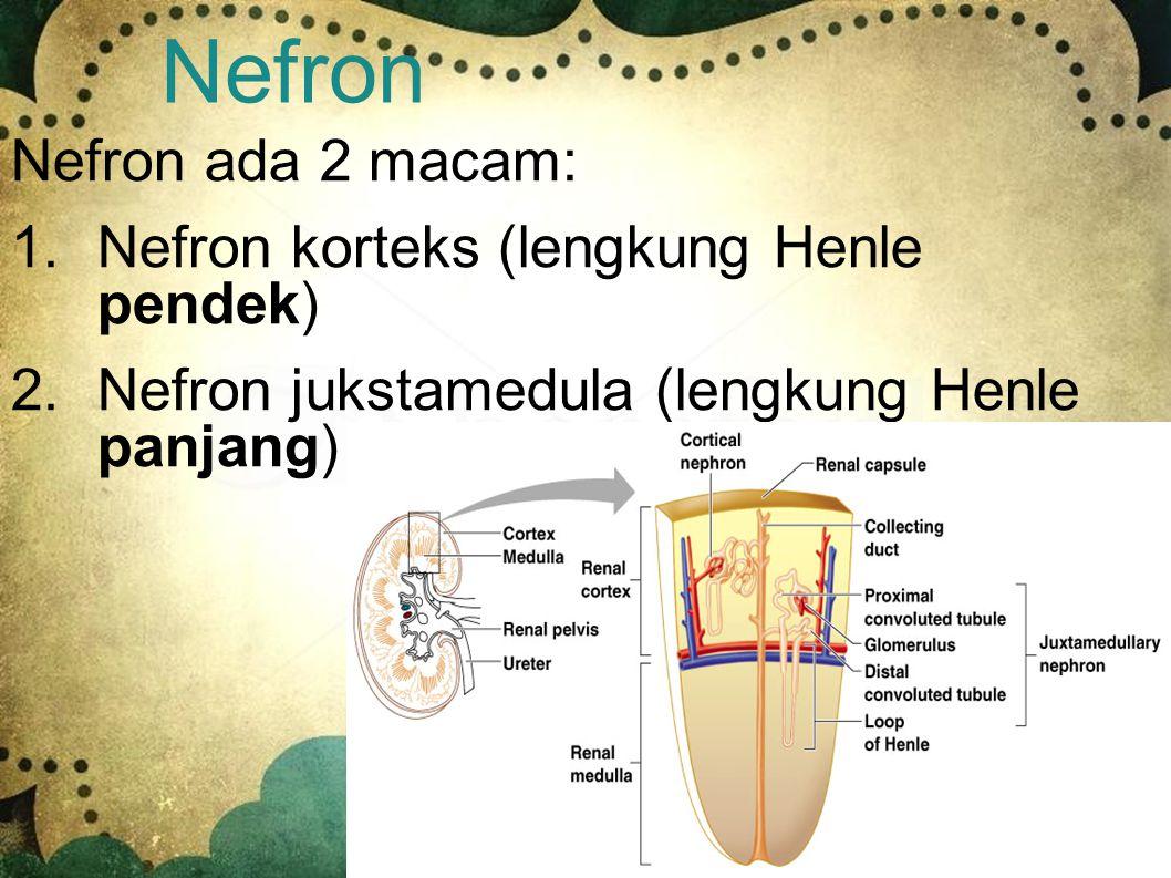 Medula (sumsum ginjal) tubulus: bermuara pada tonjolan/papilla di pelvis/rongga ginjal
