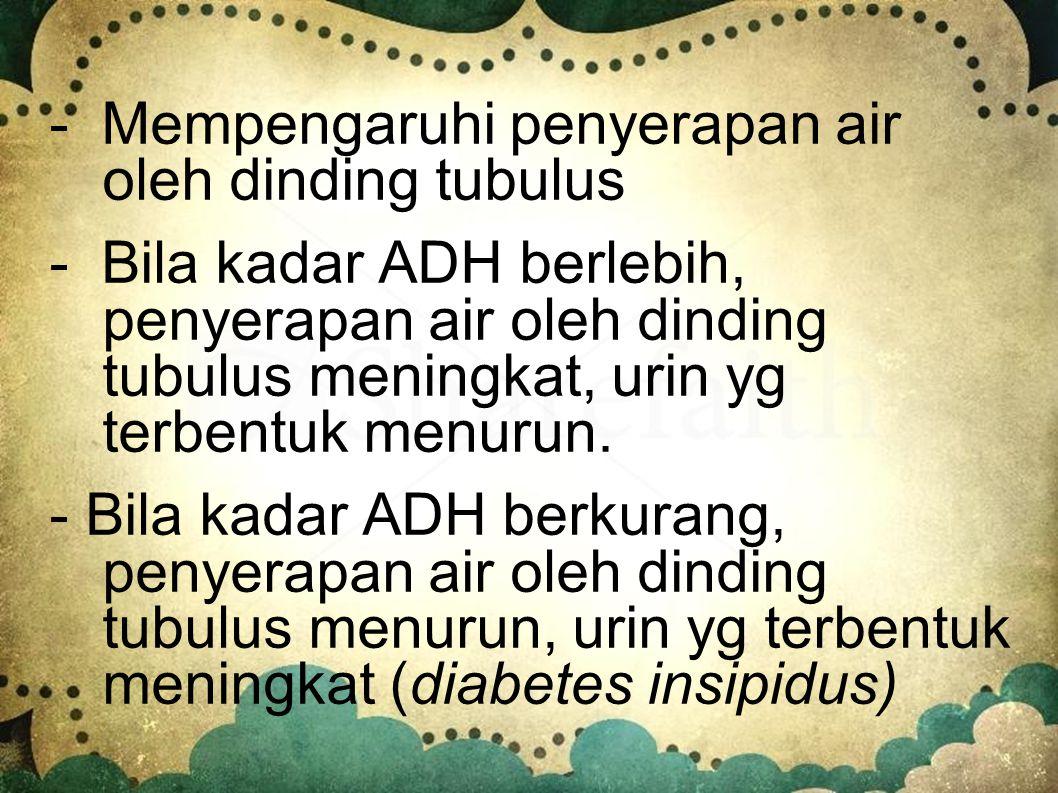 3. Hormon antidiuretika (ADH) - Dihasilkan oleh hipofisis posterior - Pengeluaran hormon ini ditentukan oleh reseptor khusus di dalam otak yang secara