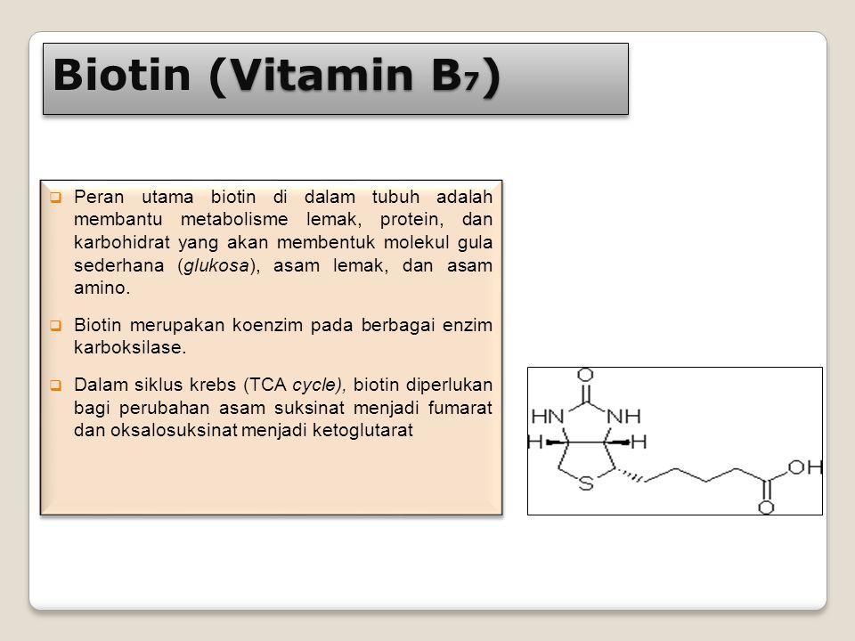 Vitamin B 7 ) Biotin (Vitamin B 7 )  Peran utama biotin di dalam tubuh adalah membantu metabolisme lemak, protein, dan karbohidrat yang akan membentu