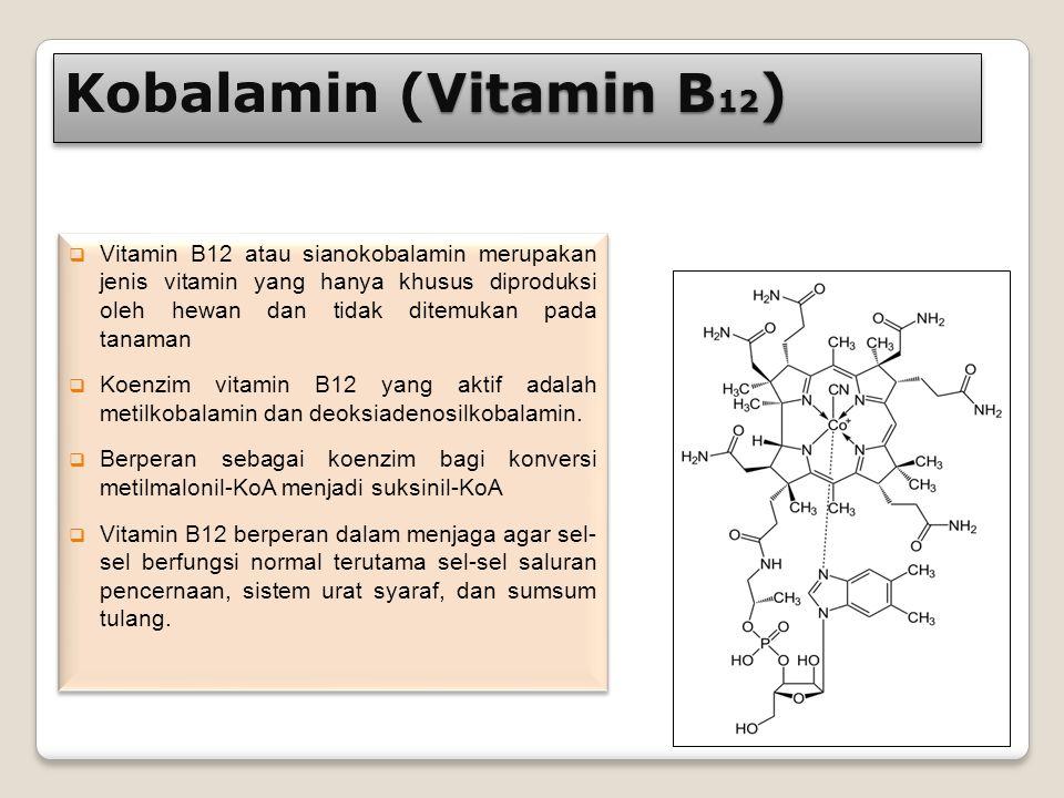 Vitamin B 12 ) Kobalamin (Vitamin B 12 )  Vitamin B12 atau sianokobalamin merupakan jenis vitamin yang hanya khusus diproduksi oleh hewan dan tidak d
