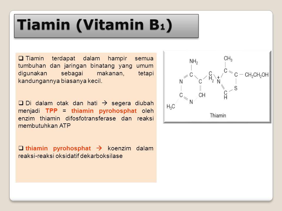 Tiamin (Vitamin B 1 )   Tiamin terdapat dalam hampir semua tumbuhan dan jaringan binatang yang umum digunakan sebagai makanan, tetapi kandungannya b