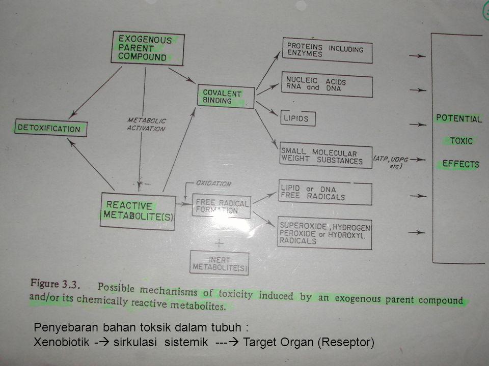 Penyebaran bahan toksik dalam tubuh : Xenobiotik -  sirkulasi sistemik ---  Target Organ (Reseptor)