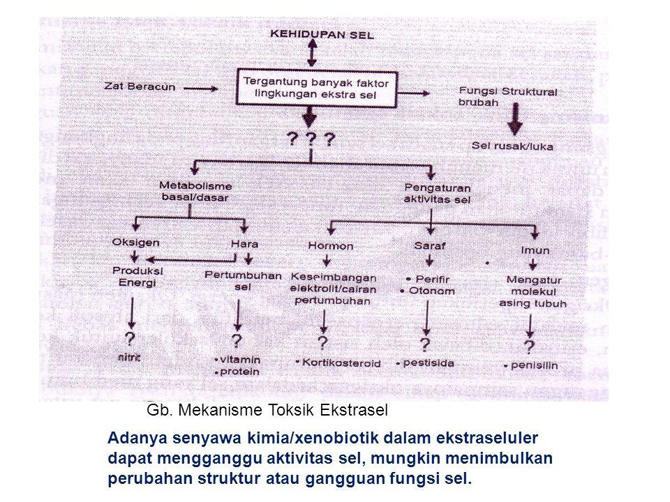 Gb. Mekanisme Toksik Ekstrasel Adanya senyawa kimia/xenobiotik dalam ekstraseluler dapat mengganggu aktivitas sel, mungkin menimbulkan perubahan struk