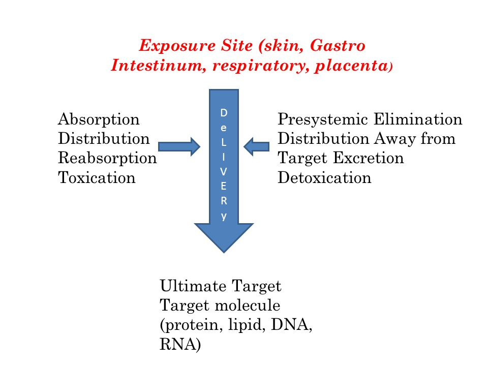 Exposure Site (skin, Gastro Intestinum, respiratory, placenta ) Ultimate Target Target molecule (protein, lipid, DNA, RNA) DeLIVERyDeLIVERy Absorption Distribution Reabsorption Toxication Presystemic Elimination Distribution Away from Target Excretion Detoxication