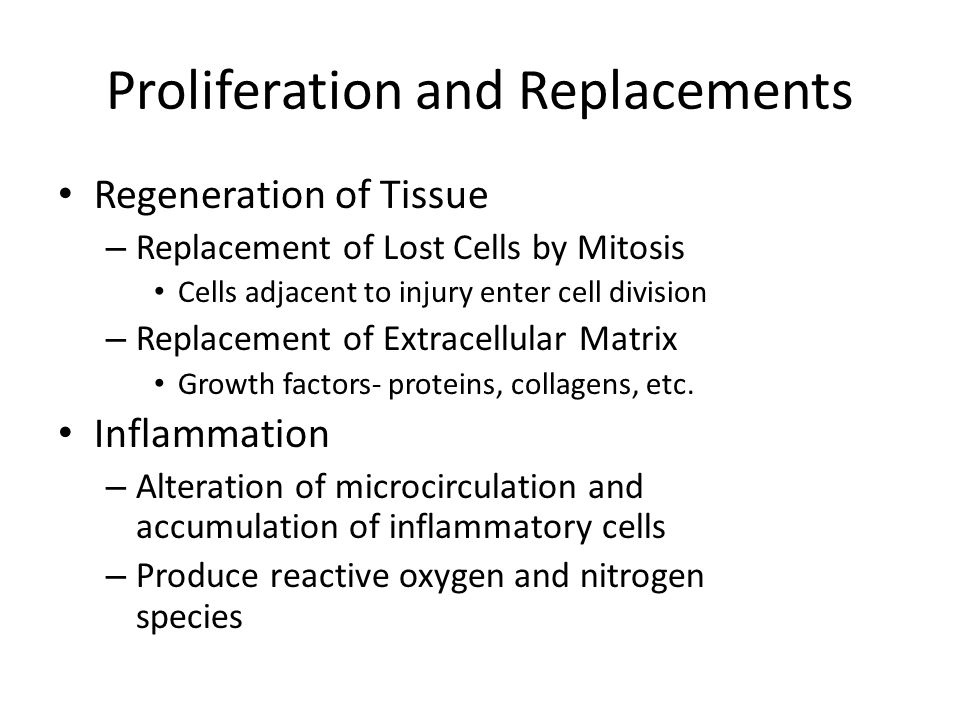Proliferation and Replacements Regeneration of Tissue – Replacement of Lost Cells by Mitosis Cells adjacent to injury enter cell division – Replacemen