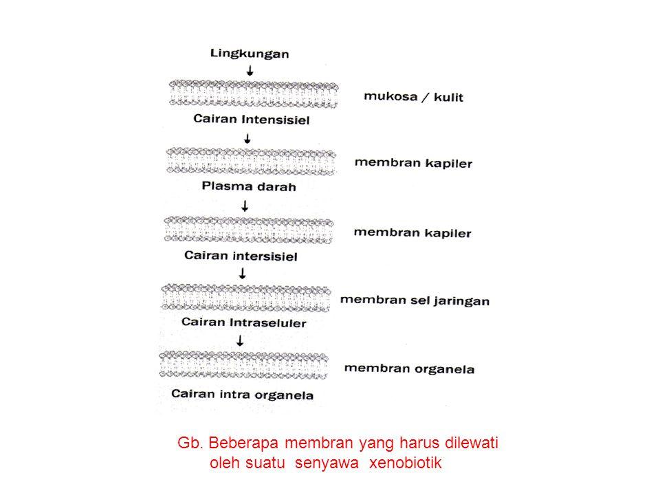 Gb. Beberapa membran yang harus dilewati oleh suatu senyawa xenobiotik