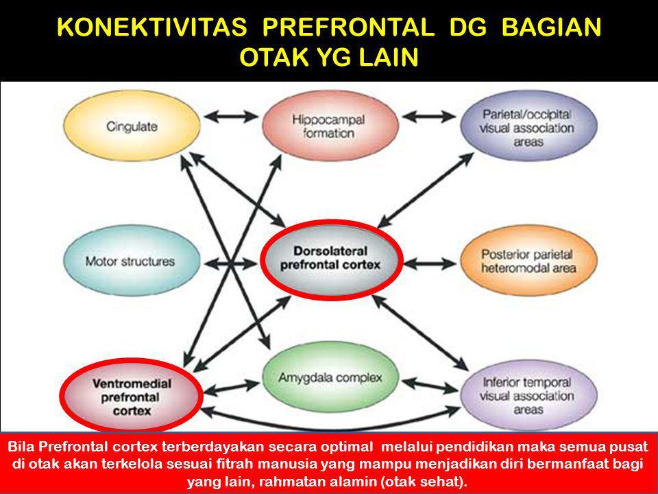 KONEKTIVITAS PREFRONTAL DG BAGIAN OTAK YG LAIN Bila Prefrontal cortex terberdayakan secara optimal melalui pendidikan maka semua pusat di otak akan te