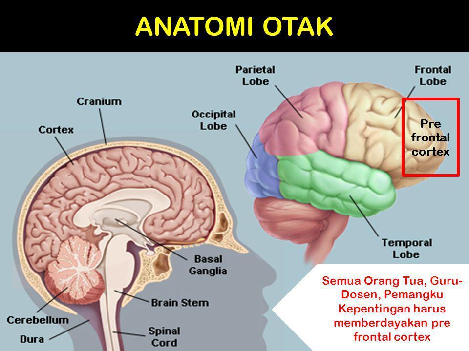 ANATOMI OTAK Pre frontal cortex Semua Orang Tua, Guru- Dosen, Pemangku Kepentingan harus memberdayakan pre frontal cortex
