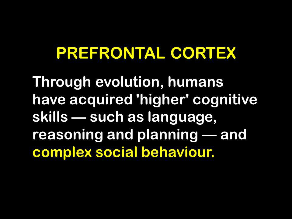 PREFRONTAL CORTEX Through evolution, humans have acquired 'higher' cognitive skills — such as language, reasoning and planning — and complex social be