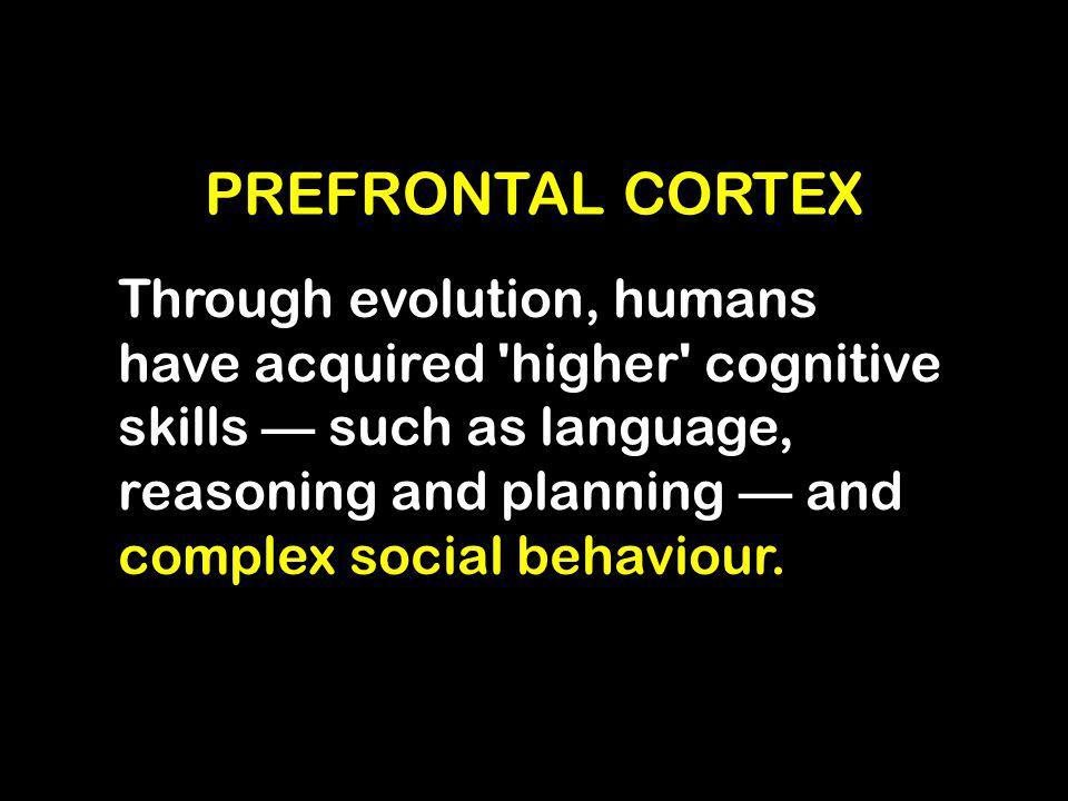 KONEKTIVITAS PREFRONTAL DG BAGIAN OTAK YG LAIN Bila Prefrontal cortex terberdayakan secara optimal melalui pendidikan maka semua pusat di otak akan terkelola sesuai fitrah manusia yang mampu menjadikan diri bermanfaat bagi yang lain, rahmatan alamin (otak sehat).
