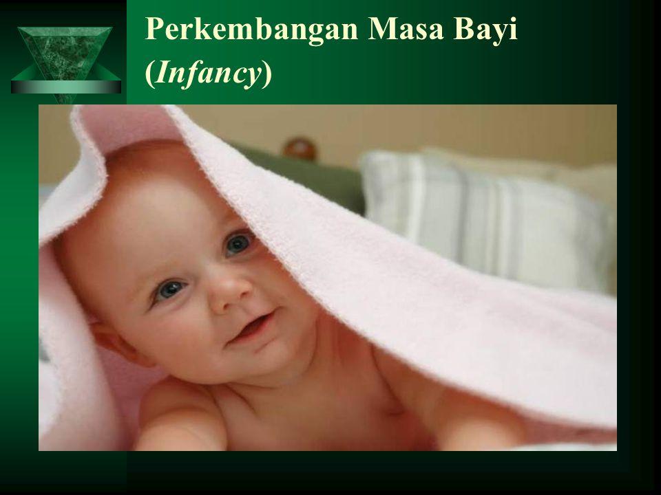 Perkembangan Masa Bayi (Infancy)