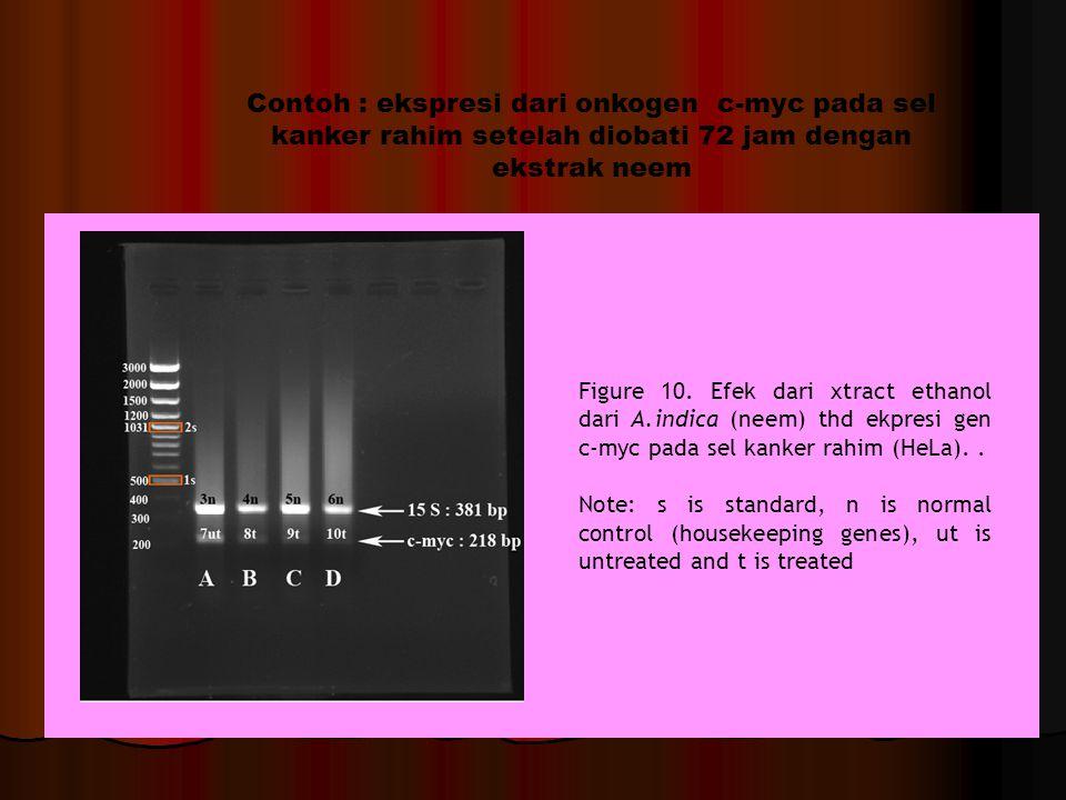 Contoh : ekspresi dari onkogen c-myc pada sel kanker rahim setelah diobati 72 jam dengan ekstrak neem Figure 10.