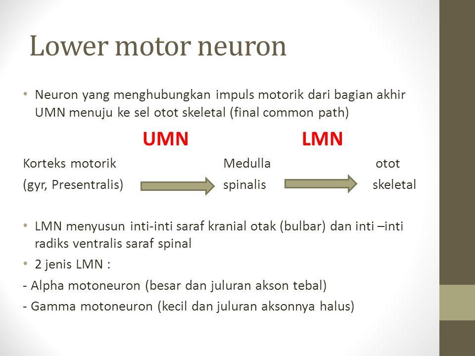 Lower motor neuron Neuron yang menghubungkan impuls motorik dari bagian akhir UMN menuju ke sel otot skeletal (final common path) UMNLMN Korteks motor