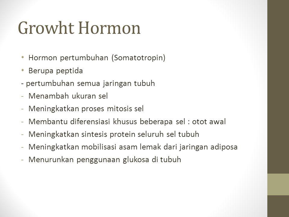 Growht Hormon Hormon pertumbuhan (Somatotropin) Berupa peptida - pertumbuhan semua jaringan tubuh -Menambah ukuran sel -Meningkatkan proses mitosis se