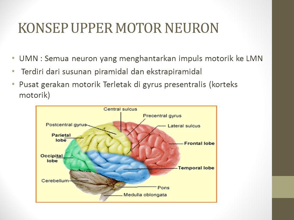 KONSEP UPPER MOTOR NEURON UMN : Semua neuron yang menghantarkan impuls motorik ke LMN Terdiri dari susunan piramidal dan ekstrapiramidal Pusat gerakan