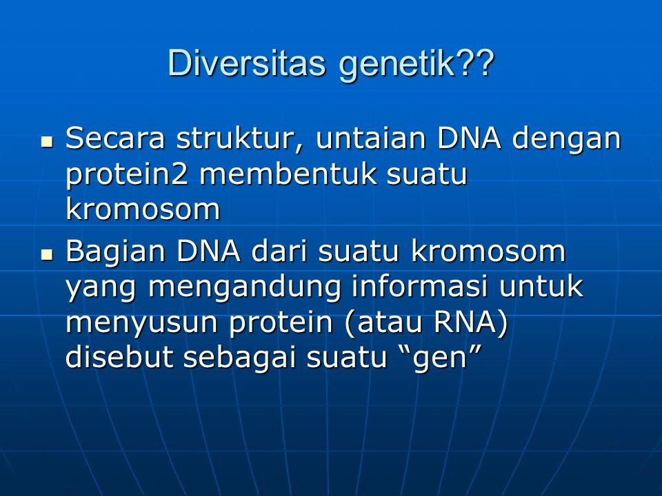 Diversitas genetik?? Secara struktur, untaian DNA dengan protein2 membentuk suatu kromosom Secara struktur, untaian DNA dengan protein2 membentuk suat