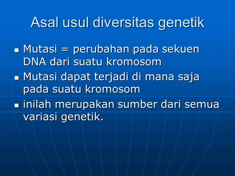 Asal usul diversitas genetik Mutasi = perubahan pada sekuen DNA dari suatu kromosom Mutasi = perubahan pada sekuen DNA dari suatu kromosom Mutasi dapa