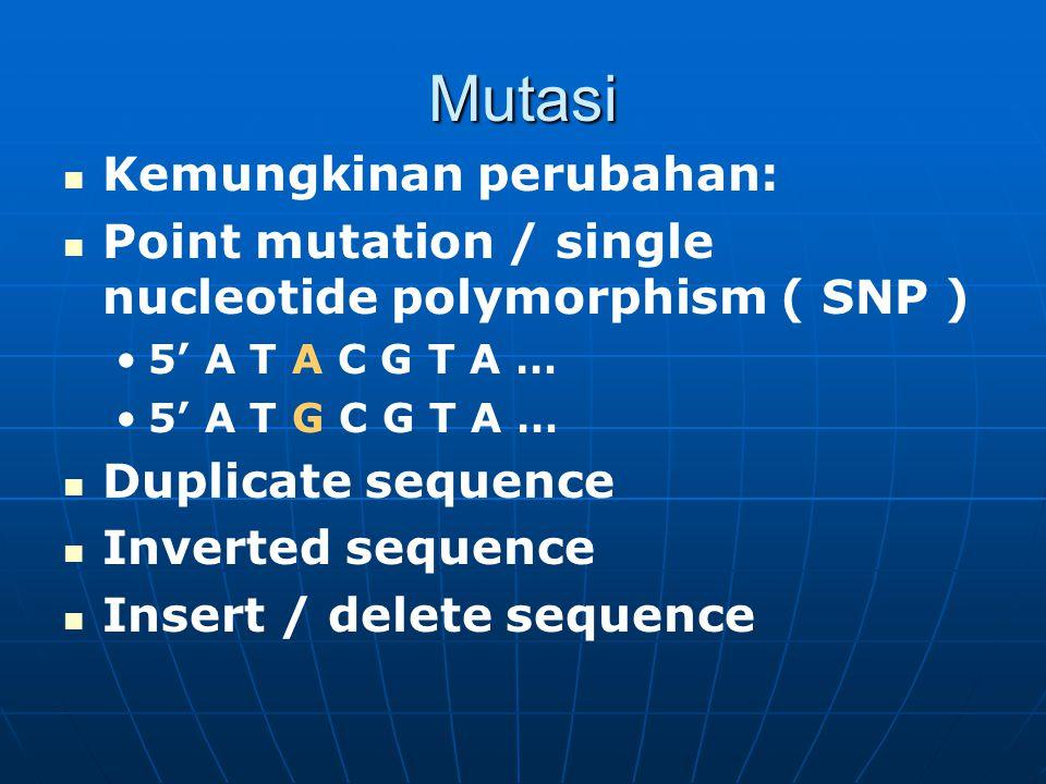 Mutasi Kemungkinan perubahan: Point mutation / single nucleotide polymorphism ( SNP ) 5' A T A C G T A … 5' A T G C G T A … Duplicate sequence Inverte