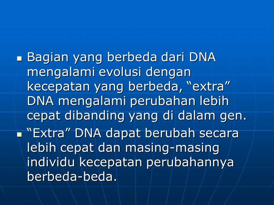 """Bagian yang berbeda dari DNA mengalami evolusi dengan kecepatan yang berbeda, """"extra"""" DNA mengalami perubahan lebih cepat dibanding yang di dalam gen."""